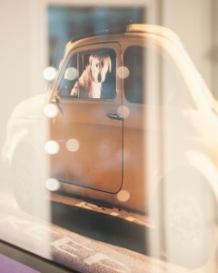 Martin Usborne – The Silence Of Dogs In Cars at The Little Black Gallery (1)